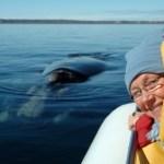 Wal- und Delphinbeobachtungen