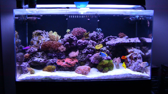 Mad Hatter's Reef | Saltwater Tank Information and Care