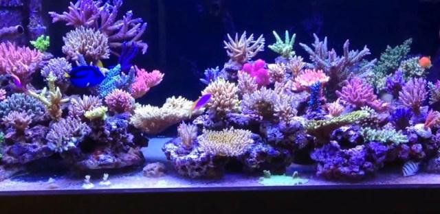Saltwater Aquarium 101