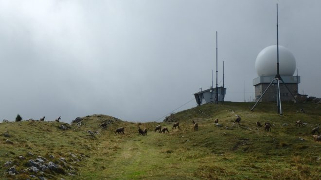 A herd of Chamois up at La Dole