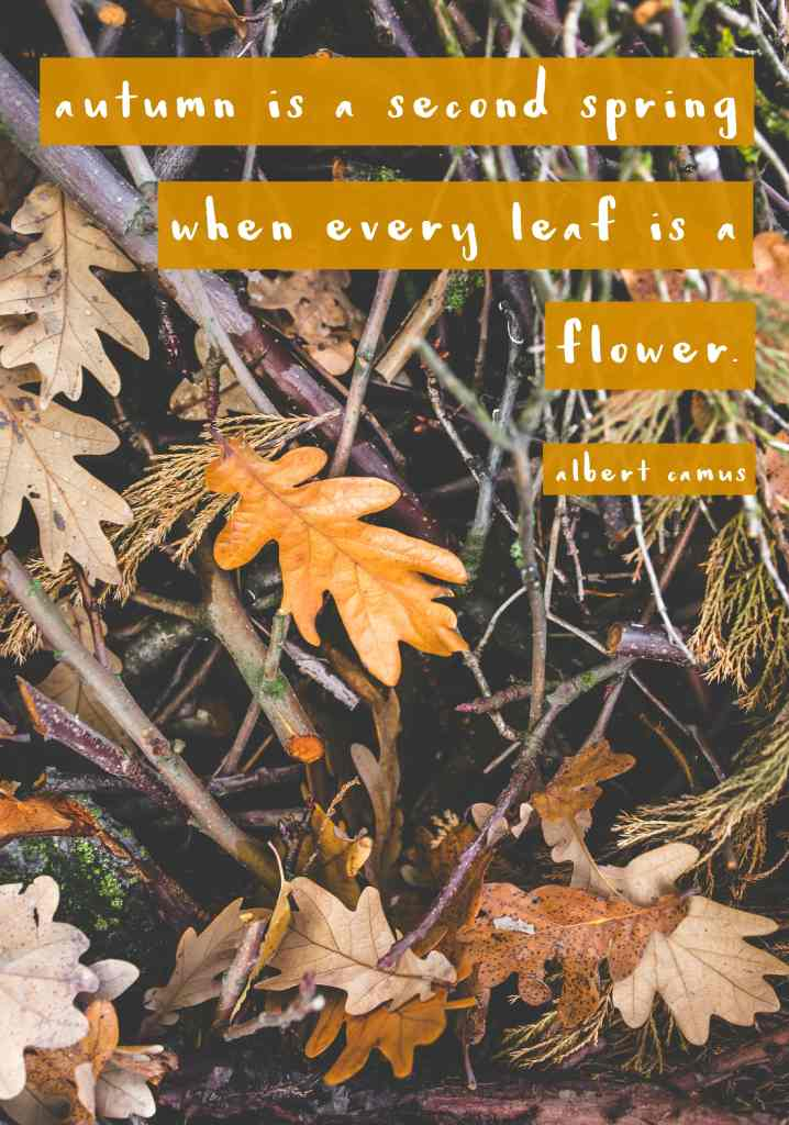 """""""Autumn is a second spring when every leaf is a flower.""""- Fall quote"""