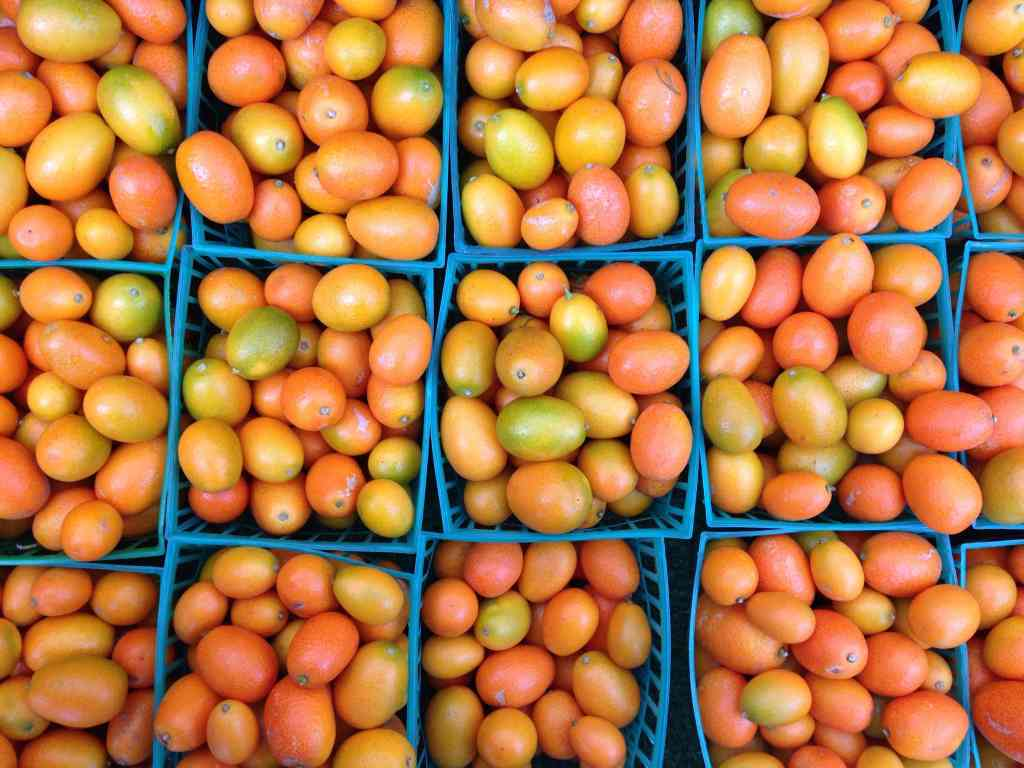 Kumquats at the Farmer's Market