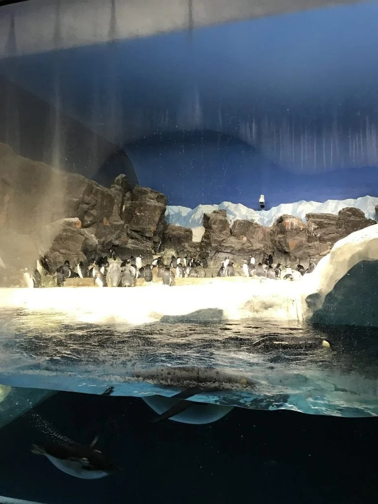 Penguins at SeaWorld San Diego