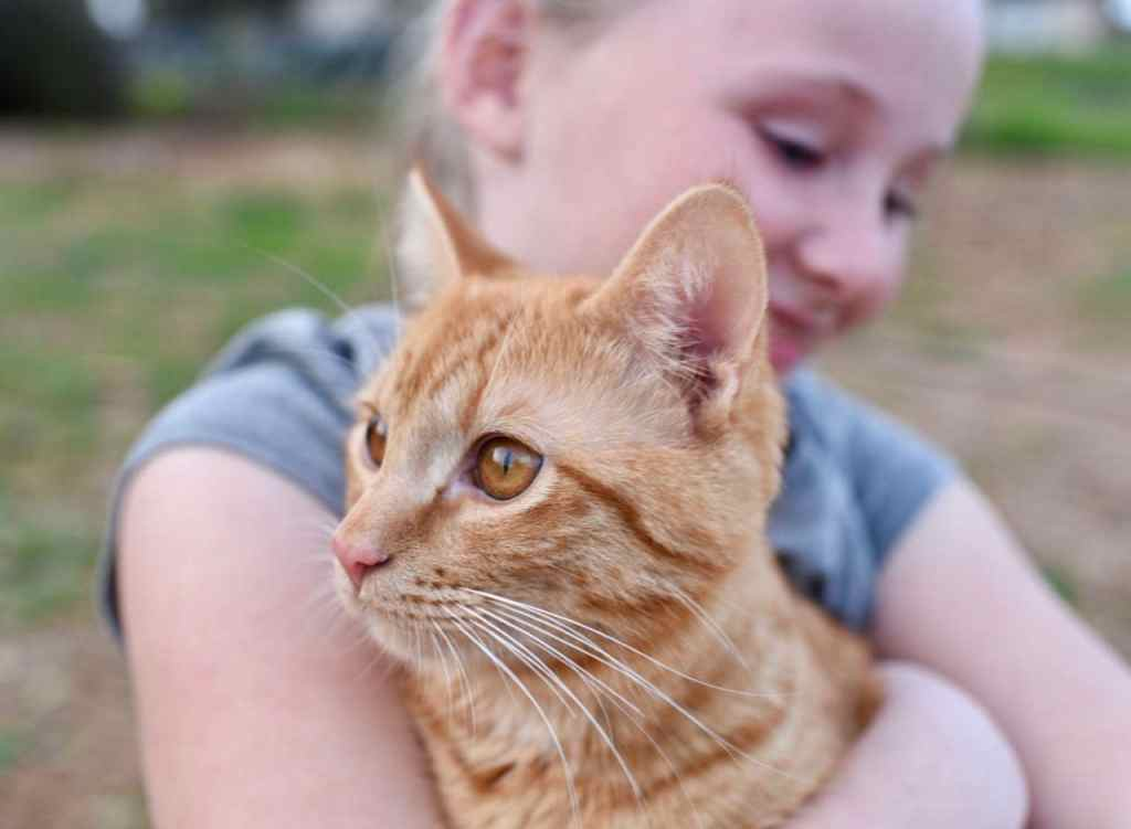 Cat nutrition and health