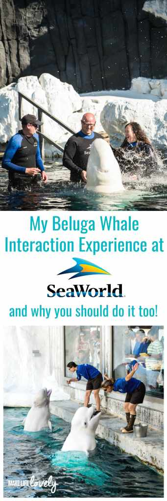 Beluga whale interaction experience review for SeaWorld San Diego. This is definitely a must do activity!