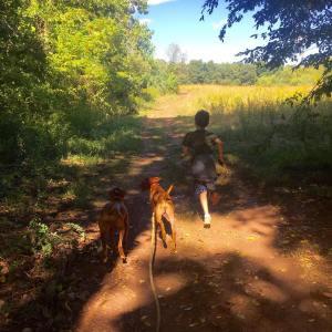 Trail running with the dogs vizsla vizslapuppy vizslagram birddogs akcdoglovershellip