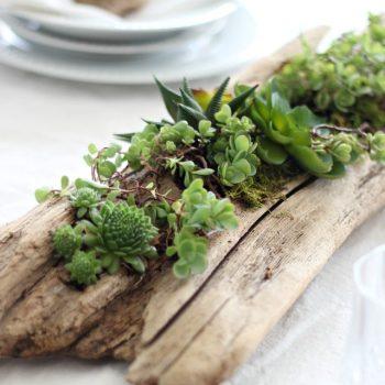 Driftwood Succulent Planter
