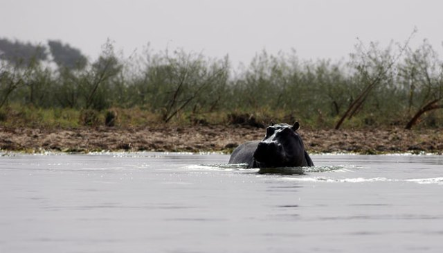 A-Mali-swimming-in-the-Niger-river