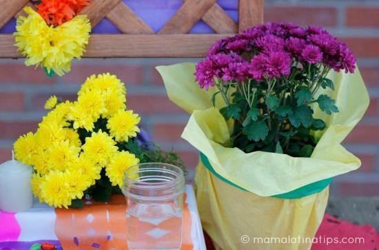 Mums - Flores