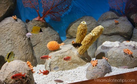 ¡Viva Baja! Exhibition at Monterey Aquarium - mamalatinatips.com