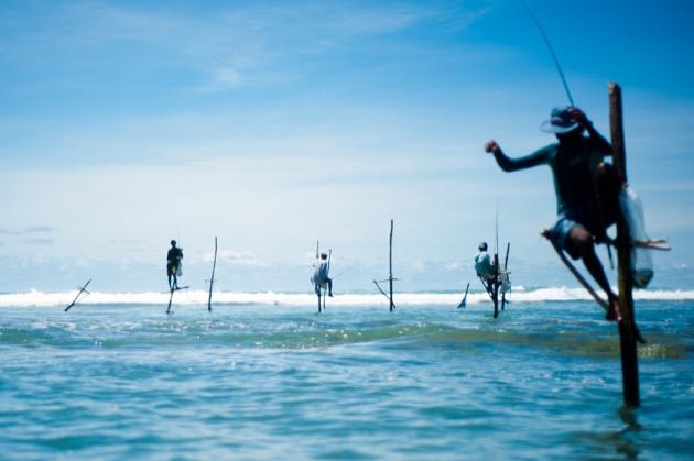 Stick fishermen of Sri Lanka.