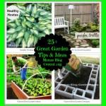 Great Garden Tips & Ideas