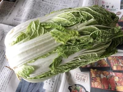 白菜まるごと1個使い切りレシピ!鍋からサラダまで何にでも使えて大活躍