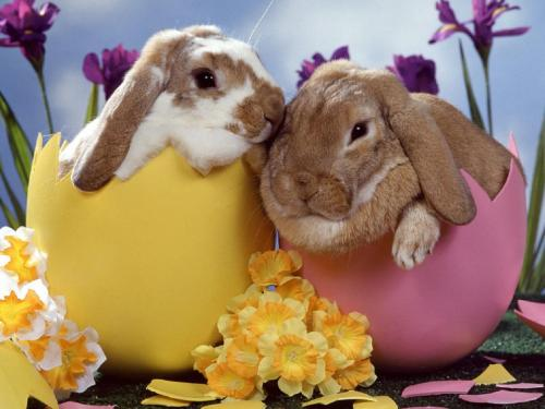 Great Easter Bunny Is On His Way To Manassas Manassas Mall Easter Bunny Is On His Way To Manassas Mall Easter Bunny S Seattle Easter Bunny S 2018