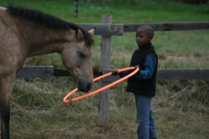 A boy working with a horse
