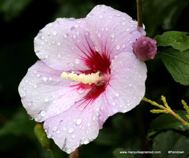 Flower Postcards from BHUTAN (15)