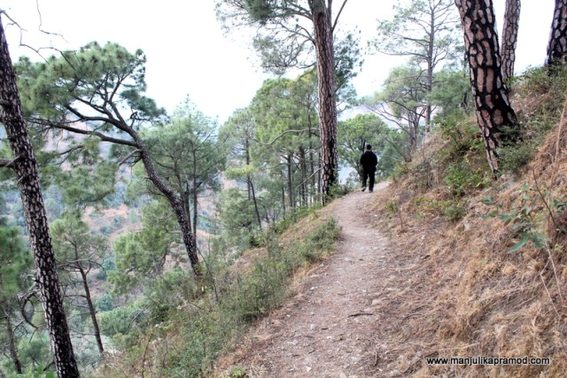 The woods and forests around Shimla