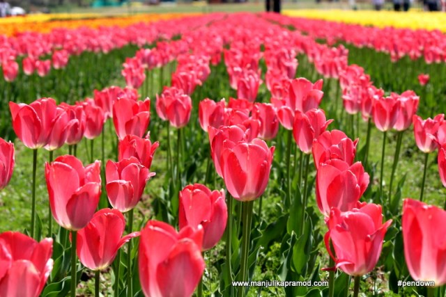 Pink flowers, Kashmir
