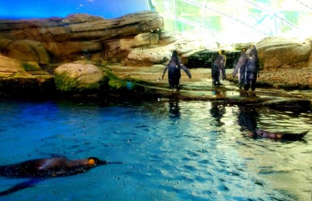 Berlin Zoo, Penguins, Euro trip