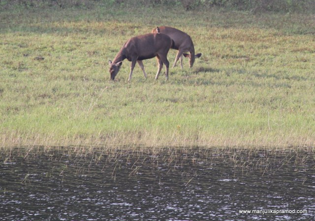 Wildlife fun in Thekkady