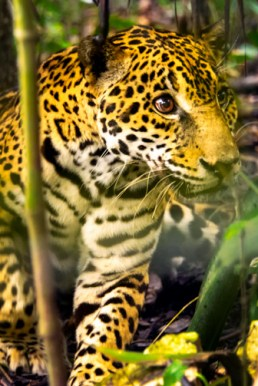Go whale watching, stay in a tea plantation, track leopards in the jungle, or view the unparalleled sight of the annual elephant migration, which takes place in Sri Lanka's Minneriya National Park.