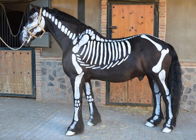 Caballo maquillaje esqueleto Halloween