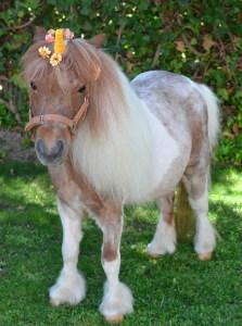 Unicornio fantasia