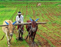 The farmer is one of the most useful people of since the beginning of civilization. We all depend upon agriculture to meet our requirement of food. We get our food...