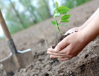 Tree-plantingis the process oftransplantingtreeseedlings, generally for forestry,land reclamation, orlandscapingpurpose. It differs from the transplantation of largertreesinarboriculture, and from the lower cost but slower and less reliable distribution of treeseeds. Trees...