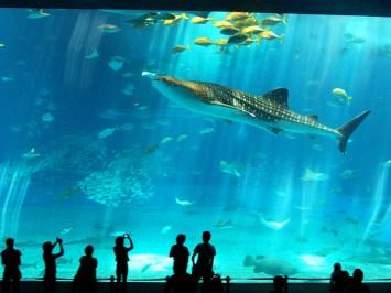 acuario-cancun