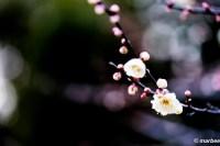 梅の花 季節だからね。(^_^)