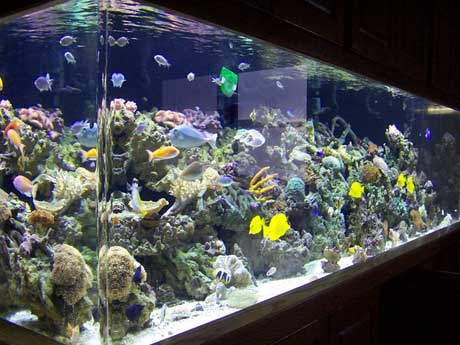 Marine Aquariums & Saltwater Aquariums