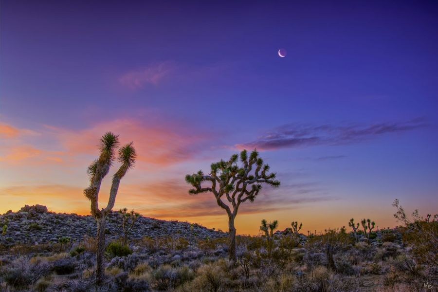 Joshua Tree National Park Sunrise