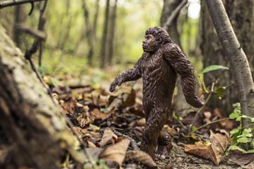 animal-bigfoot-evolution-4075-825x550