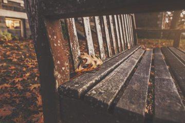 wood-bench-park-autumn-large