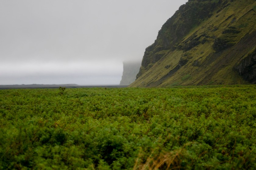 Island 2010118