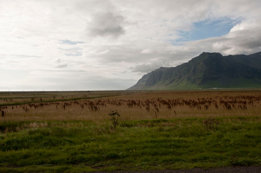 Island 2010137