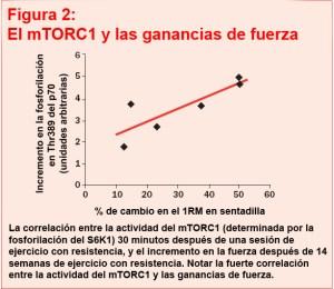 mTORC1 activación y ejercicio