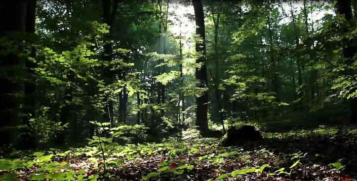 forest_screenshot-723w