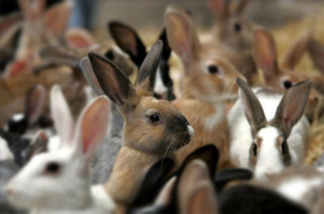 https://afktravel.com/wp-content/uploads/2014/10/rabbit-overpopulation.jpg