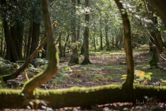 How to find the perfect woods for foraging - choose the ones that look most fairytale