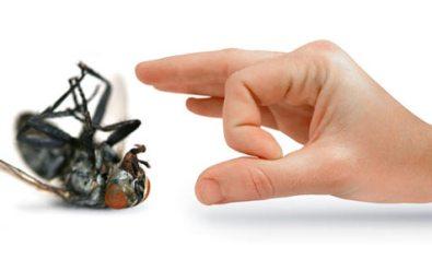 pest control hand