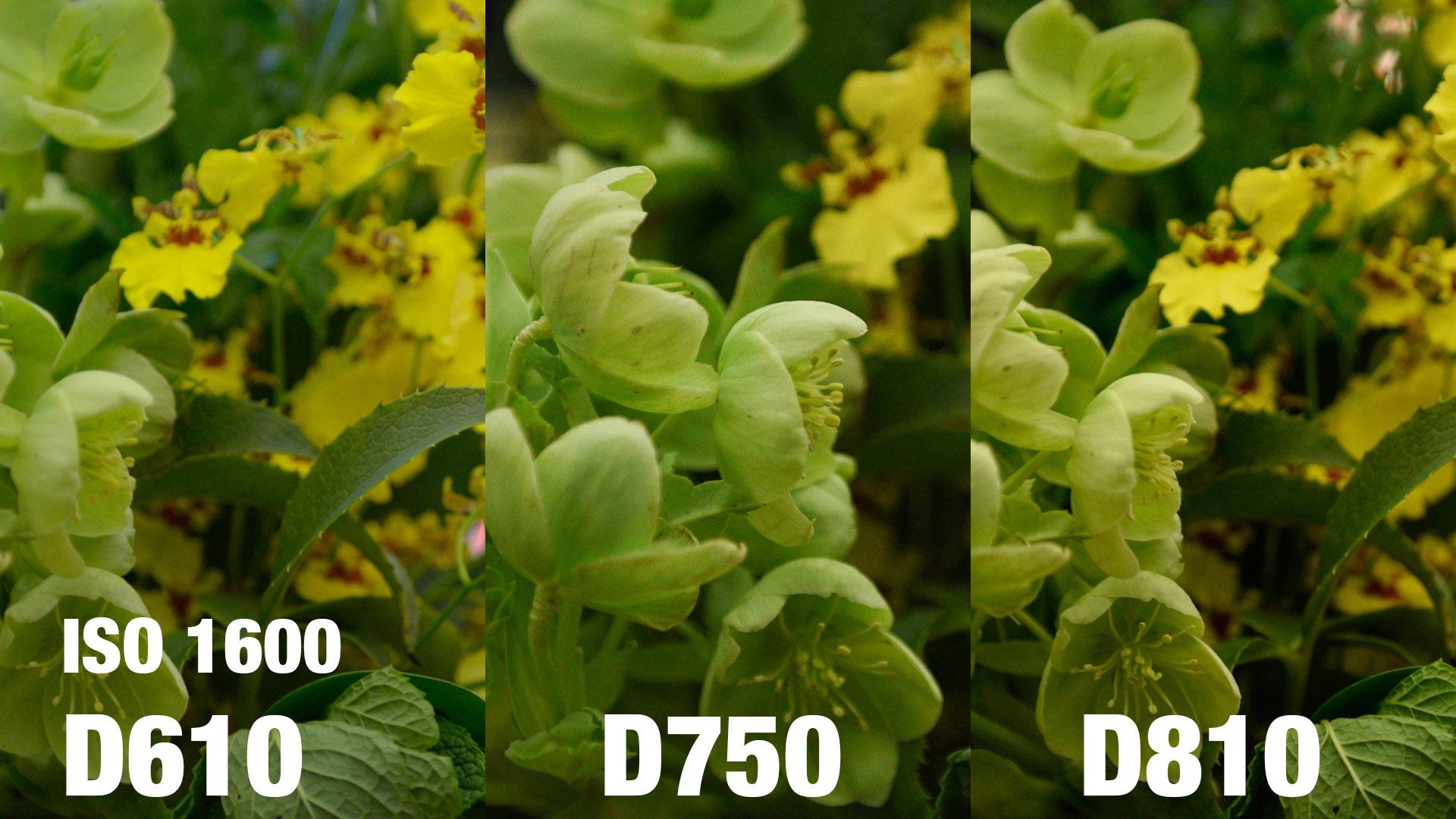 Fullsize Of D610 Vs D750