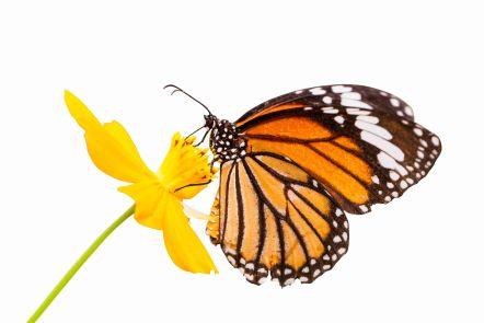 raising butterfly3