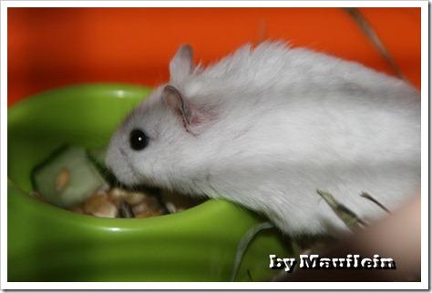 Hamster 002