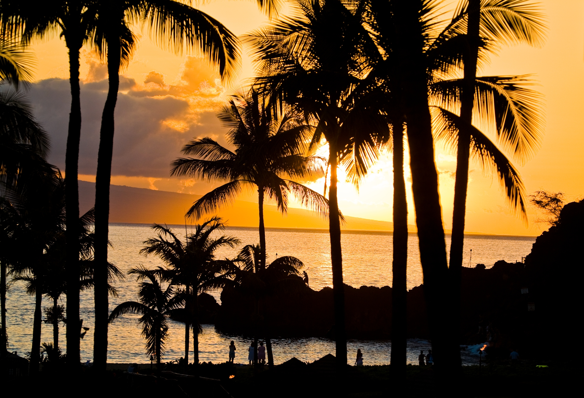 Sunset-Palm-Trees