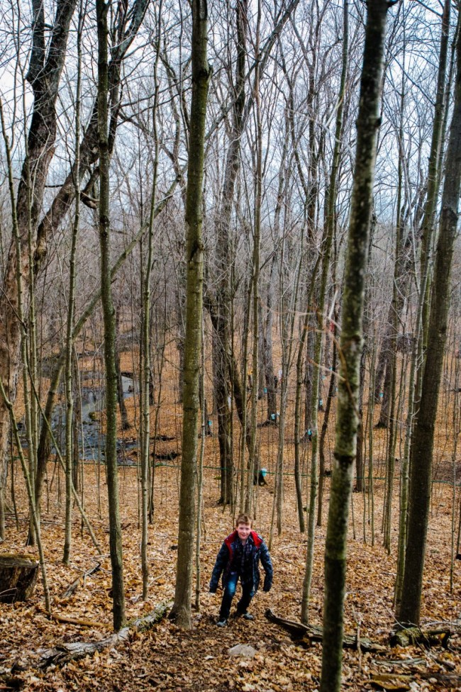 Lost In The Maple Woods