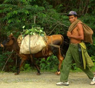 Dalisque dream of Baracoa