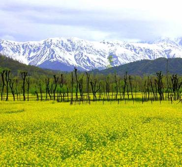 Daksum, the hidden jewel of Kashmir