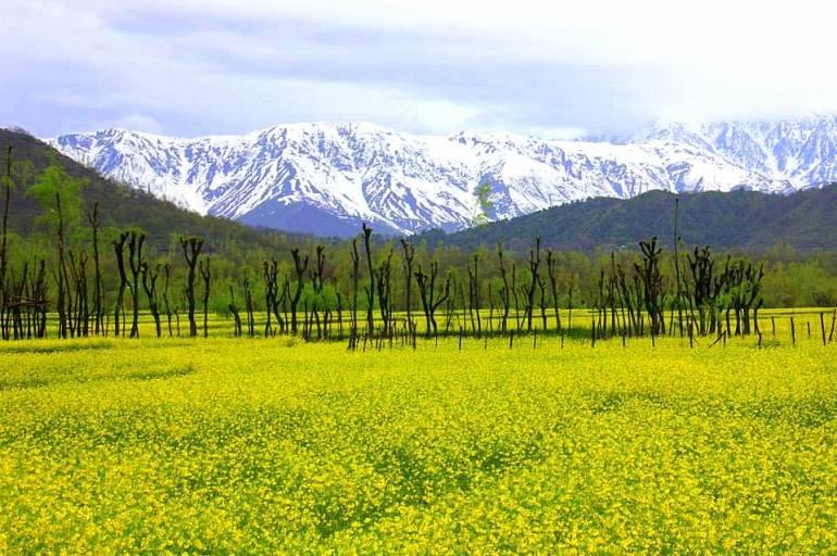 Daksum, the hidden jewel of Kashmir